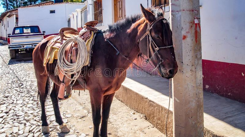 Beautiful Mexican horse with full cowboy equipment tied to a pole. A rustic street in an old traditional village with a modern car contrasting in the royalty free stock photography