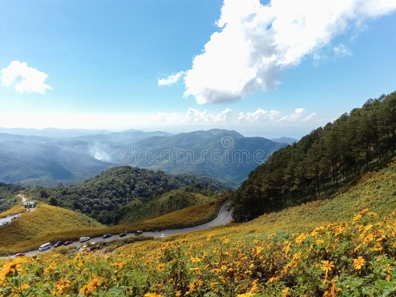 Beautiful mexican sunflower on mountains in Thailand stock image