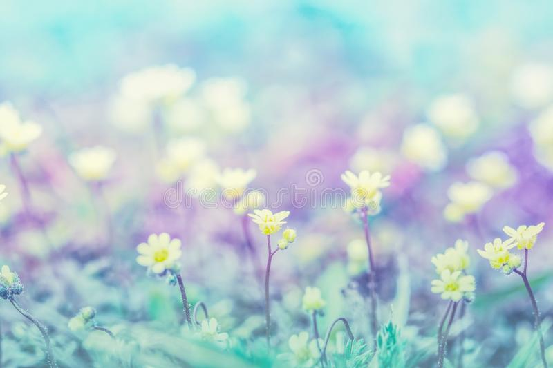 Beautiful micro wildflowers in the dreamy meadow. Delicate pink and blue colors pastel toned. Shallow depth macro background. Greeting card template. Copy royalty free stock image