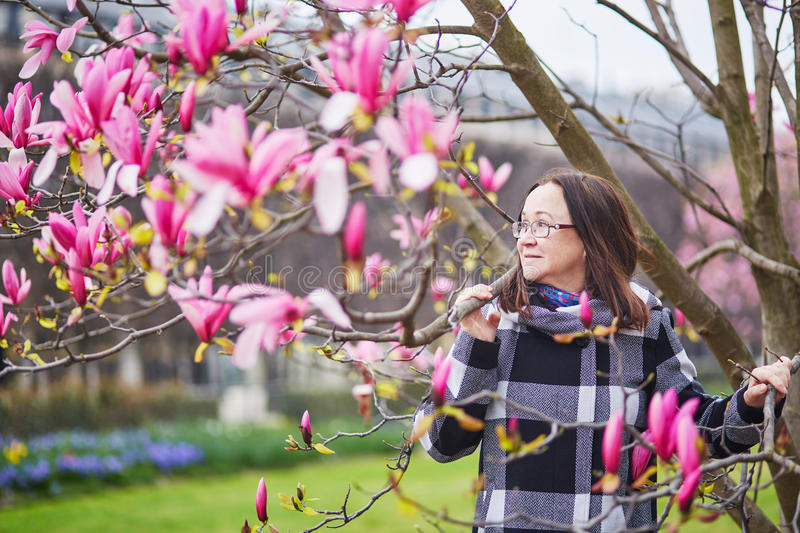 Beautiful middle aged admiring pink magnolia. Beautiful middle aged woman in Parisian park on a spring day admiring pink magnolia in full bloom royalty free stock image