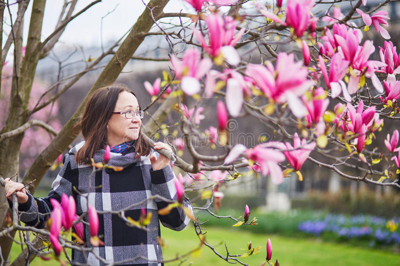 Beautiful middle aged admiring pink magnolia. Beautiful middle aged woman in Parisian park on a spring day admiring pink magnolia in full bloom stock photography
