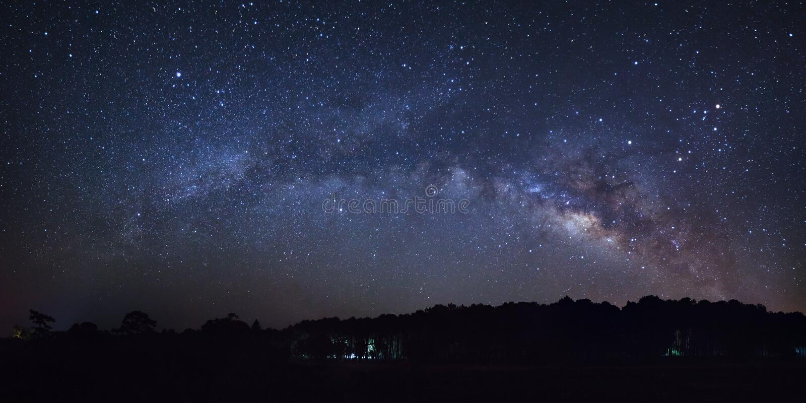 Beautiful milky way galaxy and silhouette of pine tree on a nigh. T sky. High resolution stock images