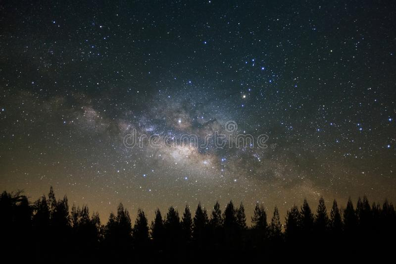 Beautiful milkyway and silhouette of pine tree on a night sky be. Fore sunrise stock photography