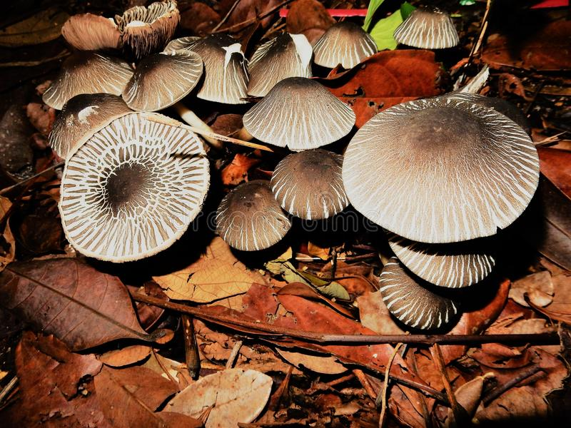 Beautiful mini mushrooms forest royalty free stock photography
