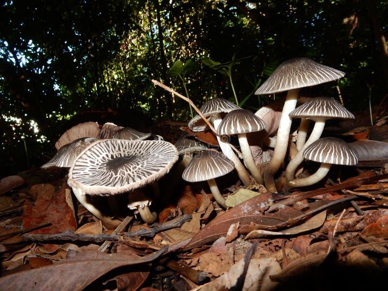 Beautiful mini mushrooms forest royalty free stock photos
