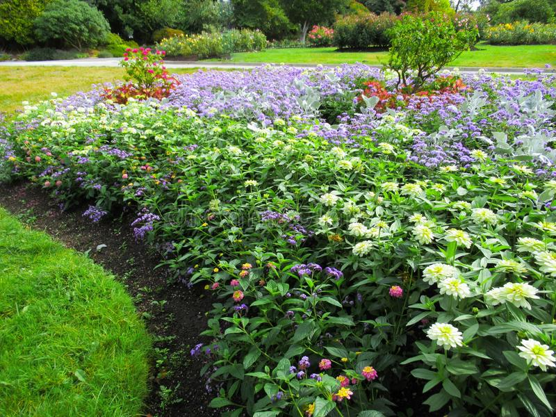 Beautiful Colourful Mixed Flower Bed In Vancouver Stanley Park Perennial Garden In August 2019. Beautiful Mixed Flower Bed In Vancouver Stanley Park Perennial stock photos
