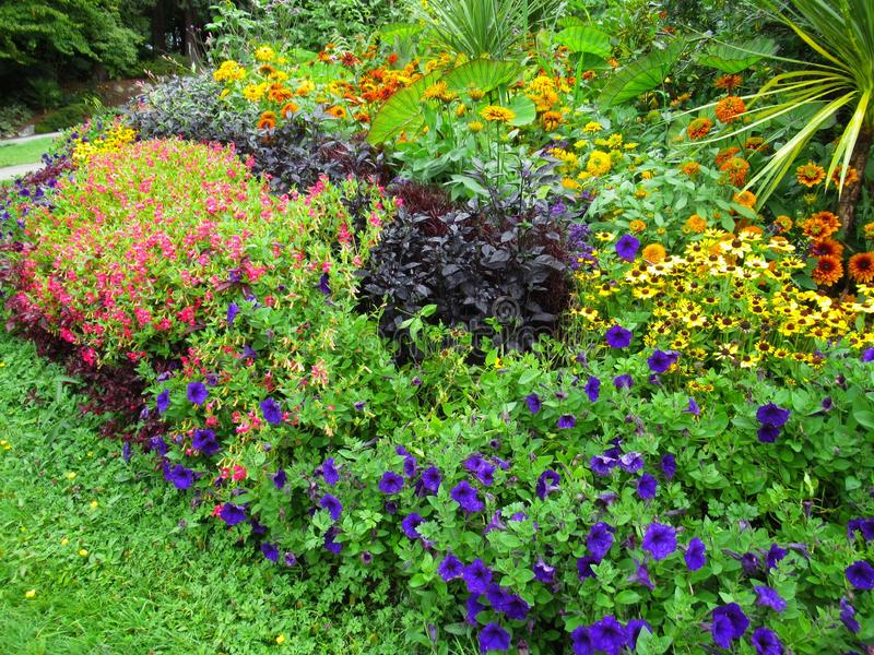 Beautiful Colourful Mixed Flower Bed At Vancouver Stanley Park Perennial Garden In August 2019. Beautiful Mixed Flower Bed At Vancouver Stanley Park Perennial royalty free stock image