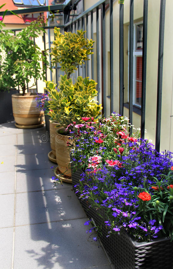 Beautiful modern terrace with mix of summer flowers. Beautiful modern terrace with seasonal summer flowers royalty free stock photography