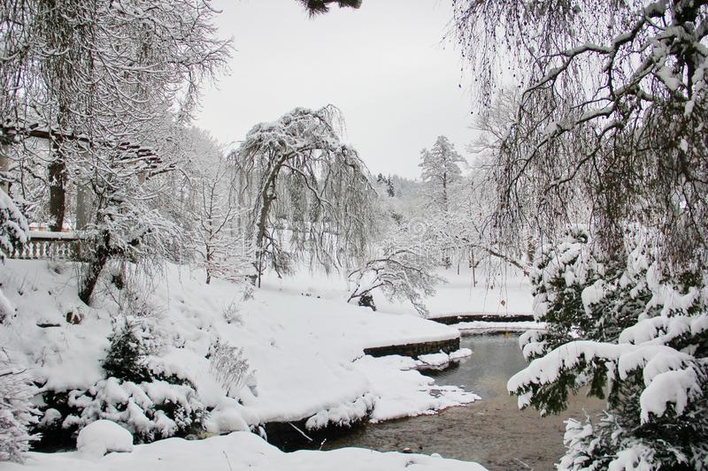 Beautiful moment in the English garden in winter stock photography