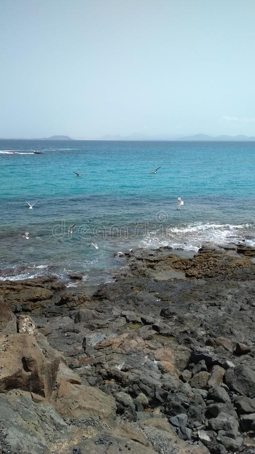 Seagulls over ocean. A beautiful moment on Lanzarote stock photo