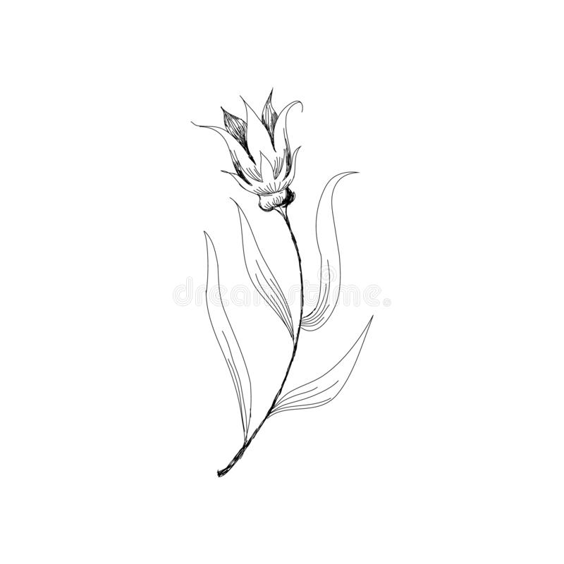 beautiful monochrome black and white bouquet lily isolated on background. Hand-drawn. design greeting card and invitation of royalty free illustration
