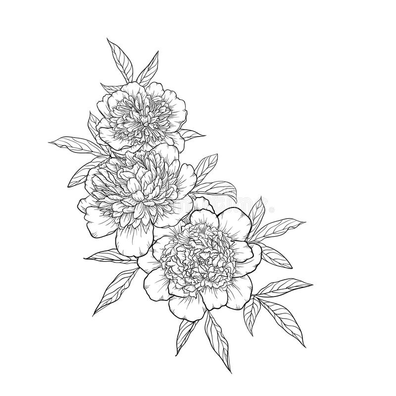 Beautiful monochrome black and white bouquet peony on background. Hand-drawn. vector illustration