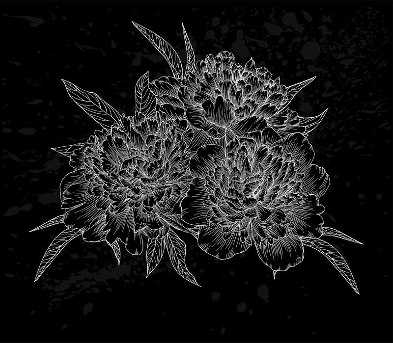 Beautiful monochrome black and white bouquet peony isolated on background. royalty free illustration