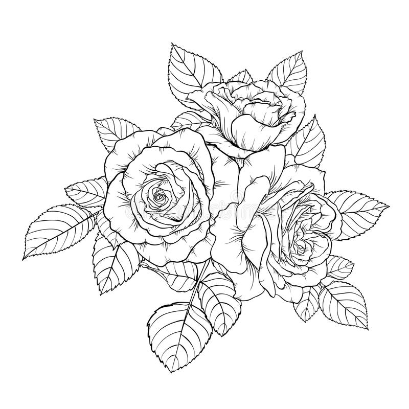 Beautiful monochrome black and white bouquet rose isolated on background. royalty free illustration