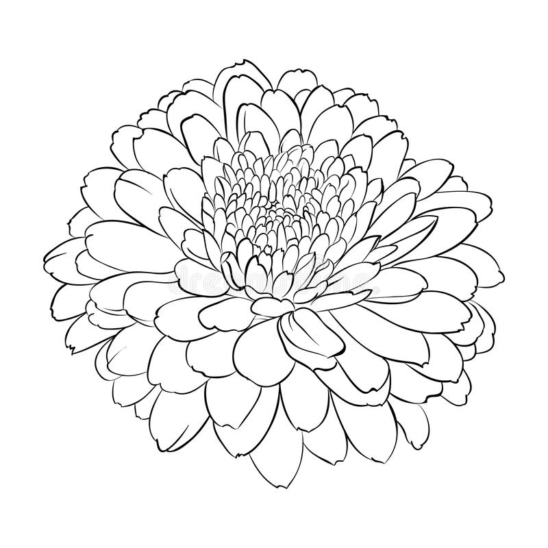 Beautiful monochrome black and white flower isolated. On white background. Hand-draw contour line and strokes. greeting card and invitation of wedding, birthday vector illustration