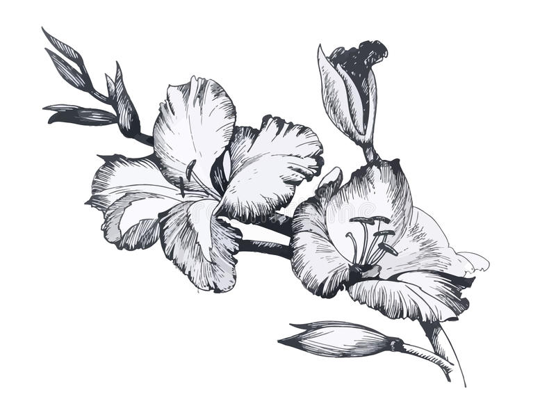 Beautiful monochrome, black and white flower isolated. Hand-drawn contour lines strokes. royalty free illustration