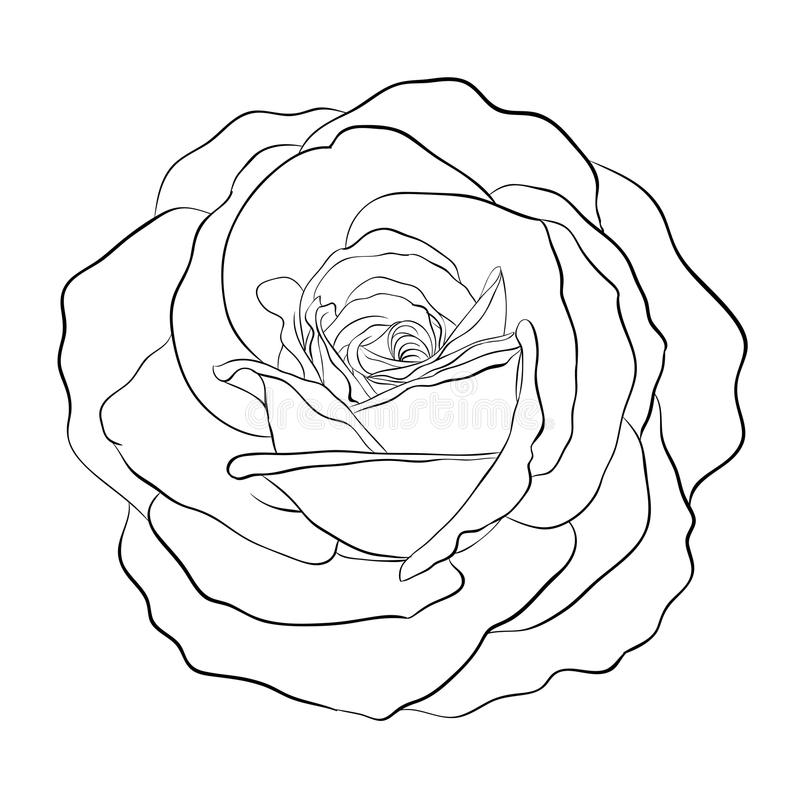 Beautiful monochrome black and white rose isolated on white background. Hand-drawn contour line. for greeting cards and invitations of wedding, birthday royalty free illustration