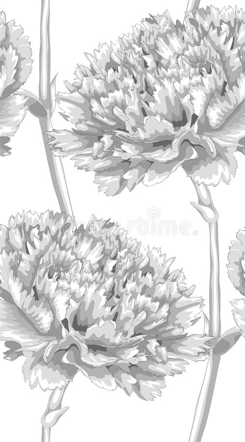 Beautiful monochrome, black and white seamless background with carnation. Hand-drawn with effect of drawing in watercolor. Background for design for greeting vector illustration