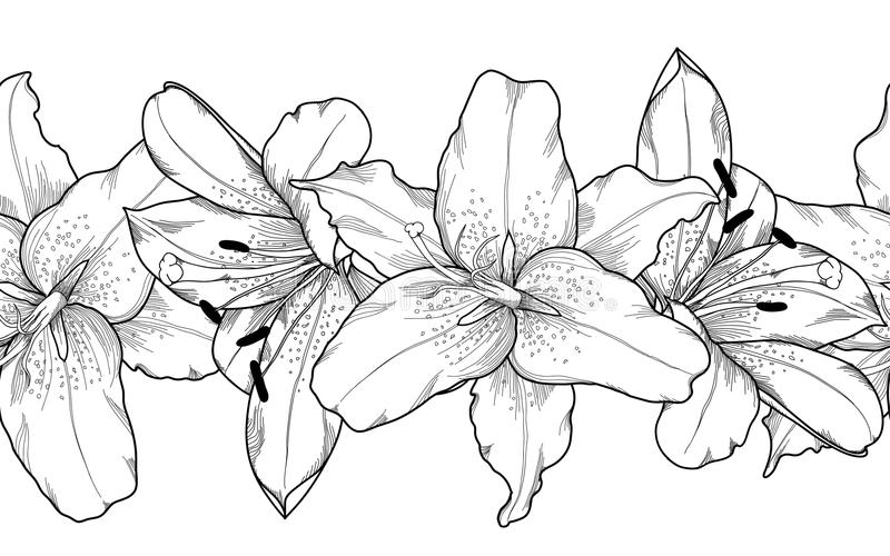 Beautiful monochrome, black and white seamless horizontal frame element of gray lily flowers. vector illustration