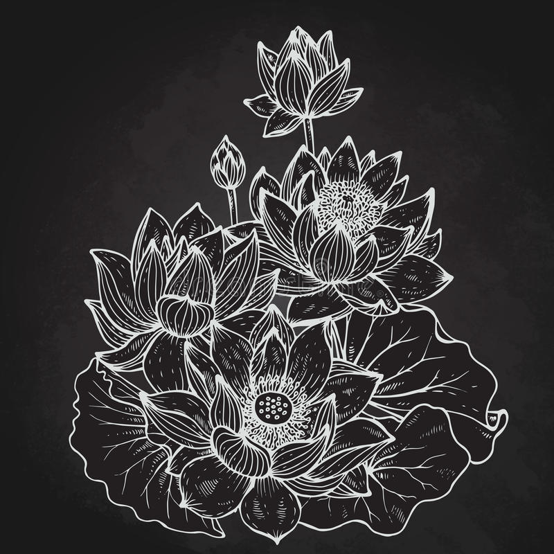 Beautiful monochrome vector floral bouquet of lotus flowers stock illustration