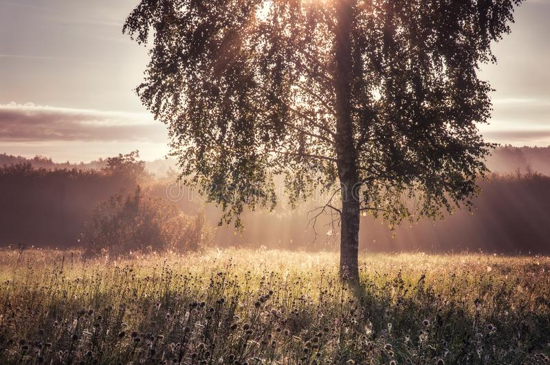 Beautiful morning in the forest stock photography