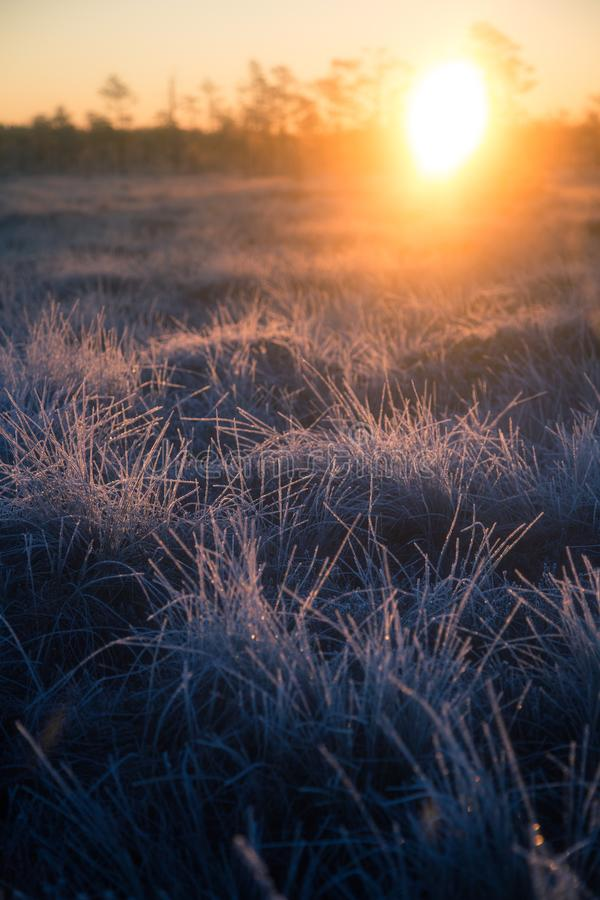 Beautiful morning landscape with a rising sun. Colorful scenery of a frozen wetlands in autumn. First frost in nature. Bright sun shine with flares stock photo