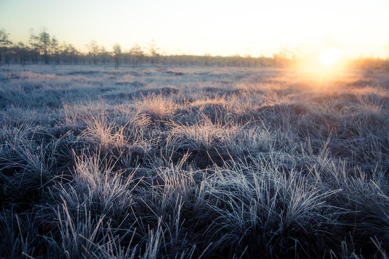 Beautiful morning landscape with a rising sun. Colorful scenery of a frozen wetlands in autumn. First frost in nature. Bright sun shine with flares royalty free stock photo