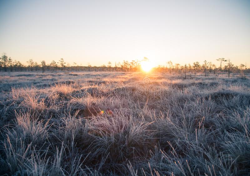 Beautiful morning landscape with a rising sun. Colorful scenery of a frozen wetlands in autumn. First frost in nature. Bright sun shine with flares stock photos