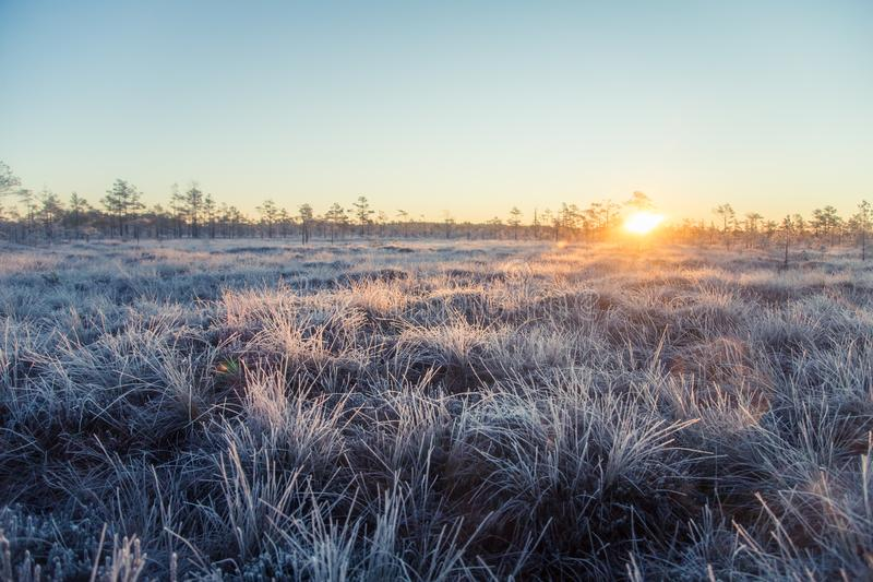 Beautiful morning landscape with a rising sun. Colorful scenery of a frozen wetlands in autumn. First frost in nature. Bright sun shine with flares royalty free stock images