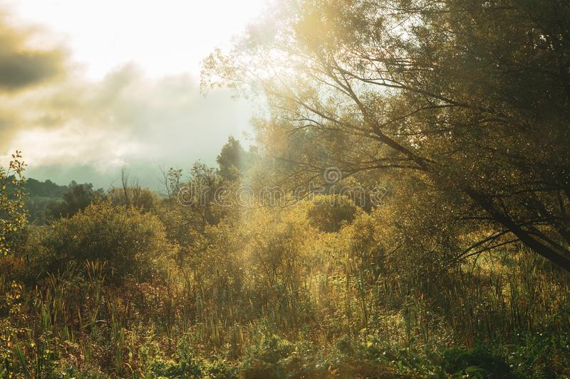 Beautiful morning landscape with sunlight, haze, trees and brush royalty free stock images