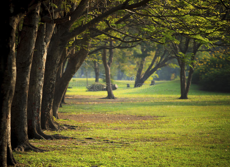 Beautiful morning light in public park with green grass field royalty free stock photo