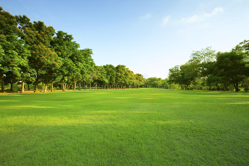 Download Beautiful Morning Light In Public Park With Green Grass Field An Stock Image - Image: 53466883