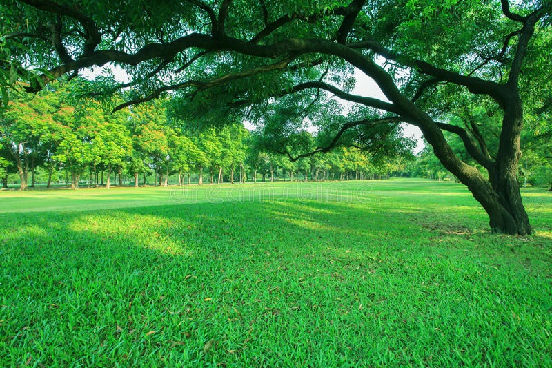 Beautiful morning light in public park with green grass field an royalty free stock photo