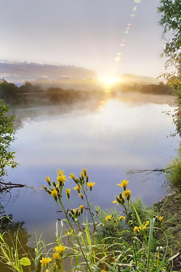 Beautiful morning on a river meander in a natural landscape with lot of fog and steam at sunrise with wild yellow flowers in the f royalty free stock image