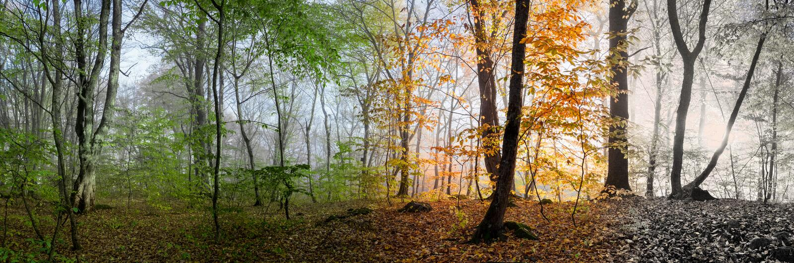 Beautiful morning scene in the forest, Change of four seasons stock photos