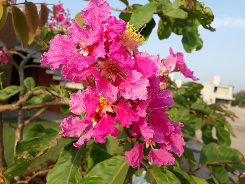In the morning scene of beautiful pink flowers royalty free stock photography