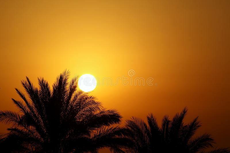 Beautiful morning sun and palm trees royalty free stock photography