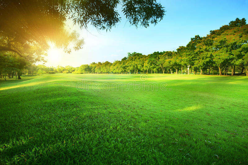 beautiful morning sun shining light in public park with green gr stock photo