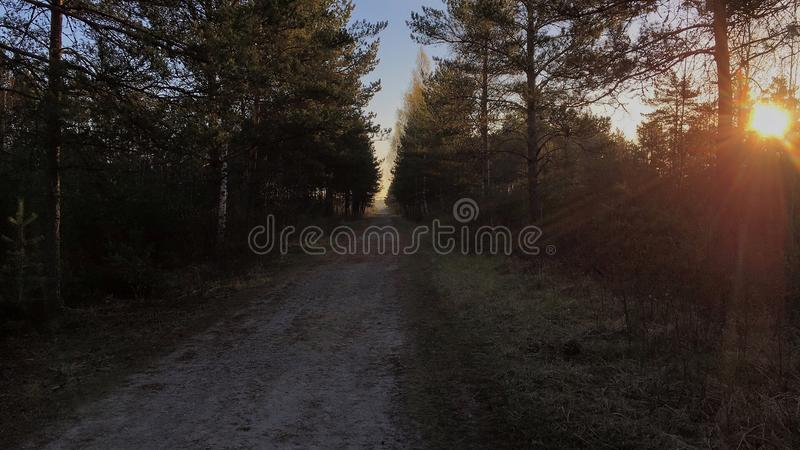 Beautiful morning in swamp forest with sunrise. royalty free stock images