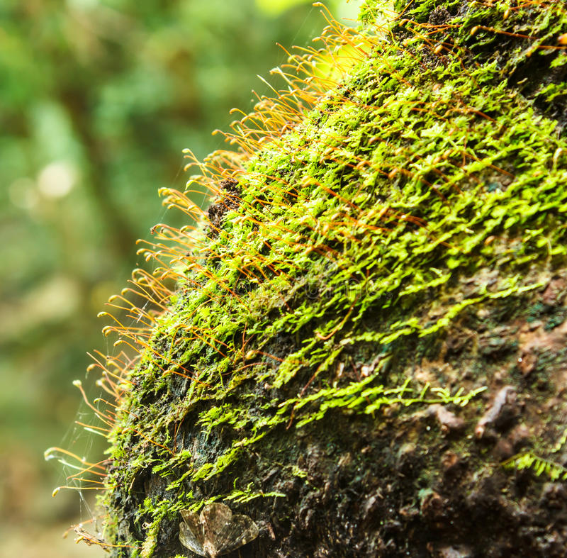 Beautiful Moss Green On Brown Wood Surface. Stock Photo