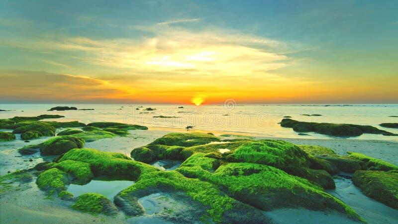 Beautiful Mossy Rock stock image