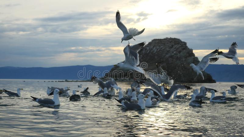 Beautiful Mountain Baikal Lake. Sunset over the mountain peaks and flying elegant gulls royalty free stock photography