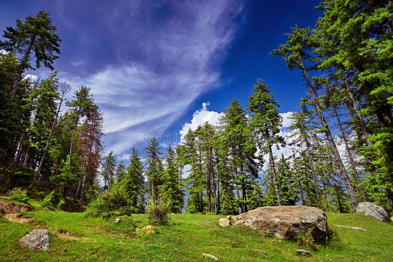 Beautiful mountain forest against blue sky background. Kullu val stock images