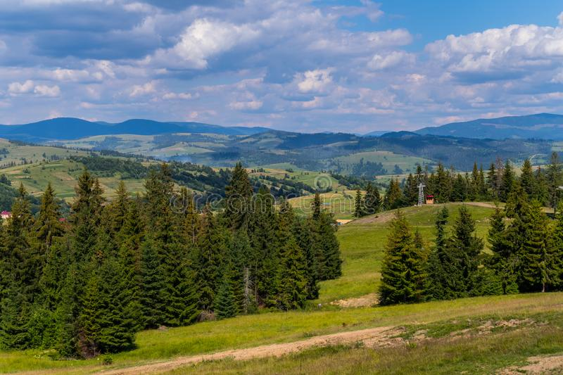Beautiful mountain green slopes with growing tall firs stretching away to the horizon line with gray clouds in the sky. For your design royalty free stock images
