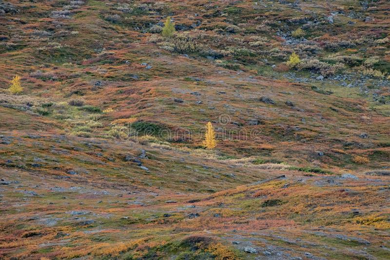 Beautiful mountain landscape in autumn stock image