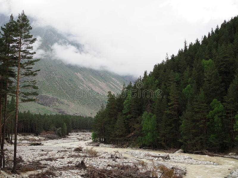 Beautiful mountain landscape with dense coniferous forest rocky slopes and mountain shallow river stock photo