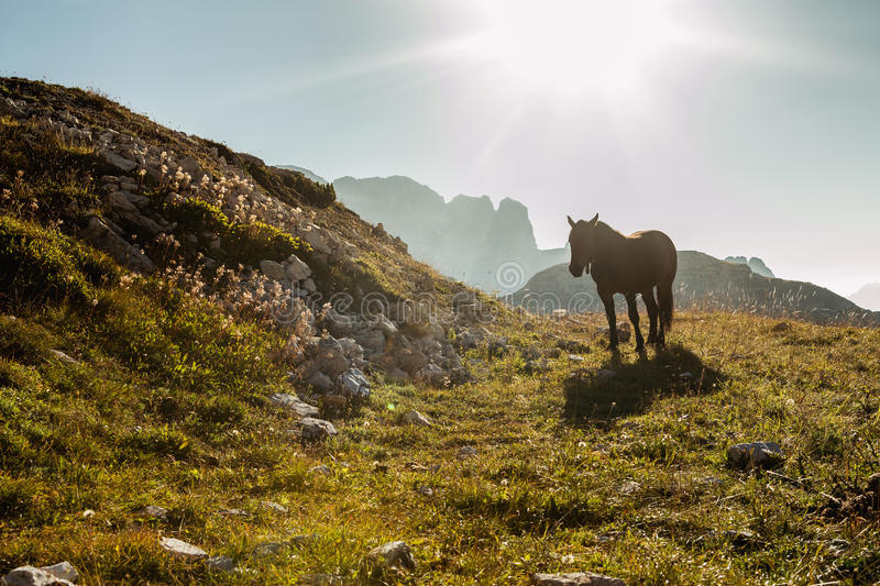 Beautiful mountain landscape with horses in the foreground royalty free stock photo