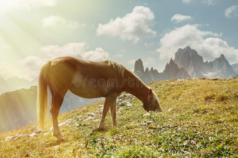 Beautiful mountain landscape with horses in the foreground, horse love stock photography