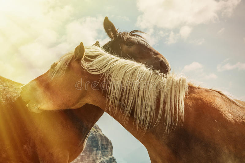 Beautiful mountain landscape with horses in the foreground, horse love royalty free stock images