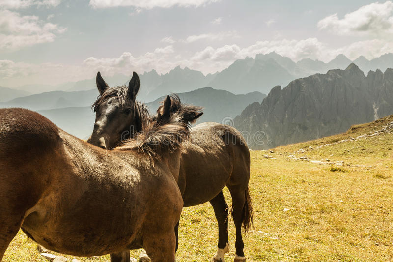 Beautiful mountain landscape with horses in the foreground, horse love royalty free stock image